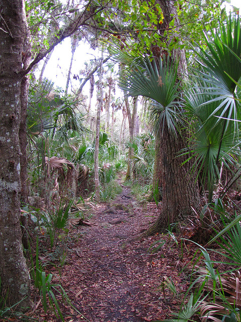 Top Hiking Spots in FL and TN