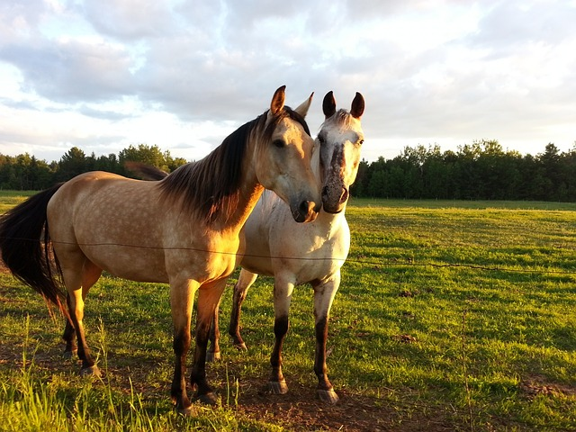 Explore Horse Farms in Ocala